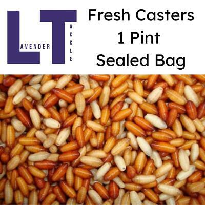 1 Pint Of Casters For Fishing In Air Tight Sealed Bag - Lavender Tackle • 3.80£