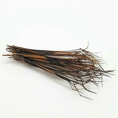 50 Double Knotted Pheasant Tail Legs(Natural)  Fly Tying Materials Daddy Hopper  • 3£