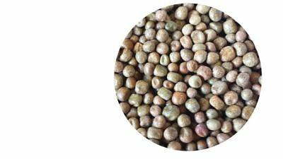 Maple Peas 25kg Fishing Bait Bulk Ingredients • 18.99£