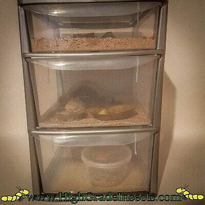 Large Draw Mealworm Breeding Setup For Live Fishing Bait, Bird And Reptile Food • 69.99£