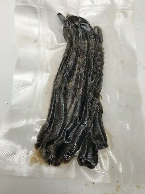 Freshly Dug And Preserved Dungerness Black Lugworm 20 In A Pack • 11.50£