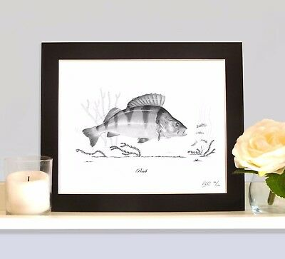 PERCH Fishing Fish Art Print MOUNTED Picture Present For Lure Predator Angler • 9.99£