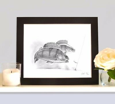 Drop Shotting For Perch Art Print MOUNTED Picture Present For Drop Shot Angler • 9.99£