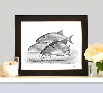 BARBEL On The Halibut Pellets MOUNTED Art Print Drawing Picture Fishing Present  • 9.99£