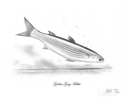GOLDEN GREY MULLET Fishing Fish Art Print Picture Present For Sea Angler NEW • 7.99£