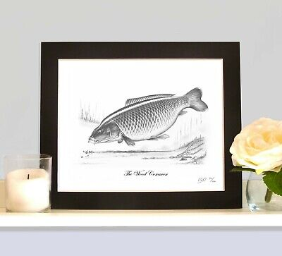 THE WOOD COMMON Limited Edition Carp Picture Fishing Fish Art Drawing Print • 9.99£