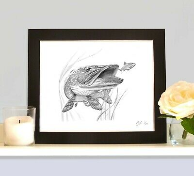 PIKE MOUNTED Art Print As Seen On The Inside Cover Of The Book Willow Pitch 3   • 9.99£