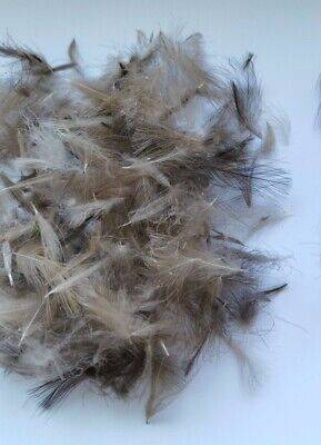 1.25 Gr CDC FEATHERS FOR FLY TYING - ASSORTED SIZES • 2.50£