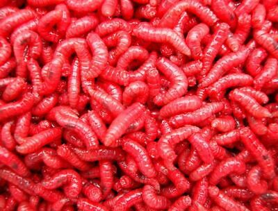 Fishing Bait Maggots ,pinkies / 1/2 Pint /1 Pint Next Day Delivery • 3.75£