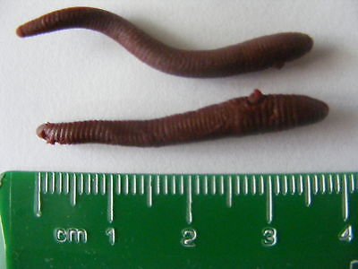 Imitation Small Worms - 10 Pieces - Fake / Artificial Bait- Post Free • 1.99£