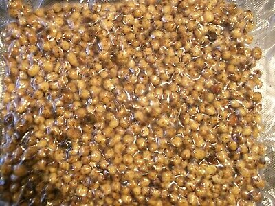 1 Kg.  Special Price   Fully Cooked Tiger Nuts,particles,spod,carp Fishing Bait  • 7.99£