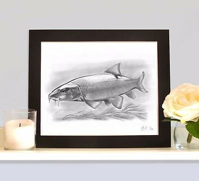 BARBEL Underwater Fish Art Print Drawing Picture MOUNTED Present Gift For Angler • 9.99£