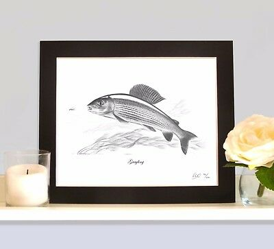 GRAYLING Fishing Fish Art Print MOUNTED Picture Present For Fisherman Angler • 9.99£