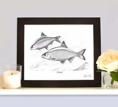 ROACH Fishing Fish Art Print Picture MOUNTED Present For Roach Angler Fisherman • 8.99£