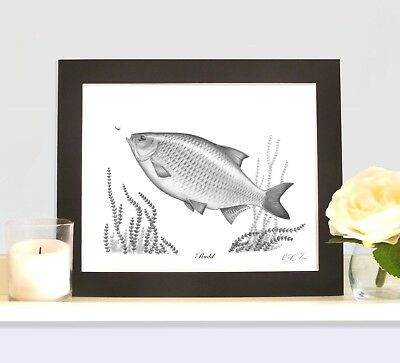 RUDD Limited Edition Fish Picture Print Fishing Gift Collectable • 9.99£