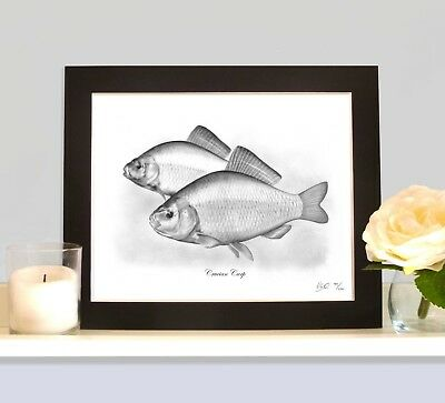 CRUCIAN CARP Mounted Limited Edition Art Print Picture • 9.99£
