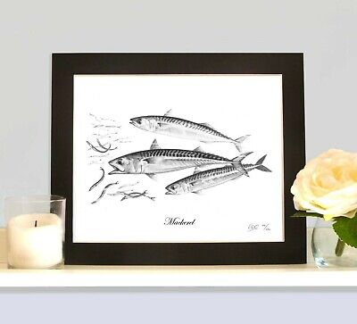 MACKEREL Limited Edition Sea Fish Picture Print Fishing Trip Gift Collectable • 9.99£