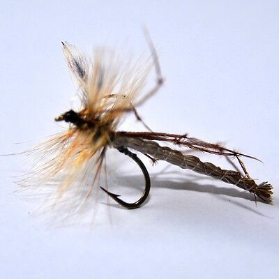 DADDY LONG LEGS  Extended Body Dry Fly Fishing Flies  By Dragonflies  • 4.92£